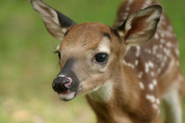 Cutest Deer