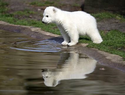 Cutest Polar Bear