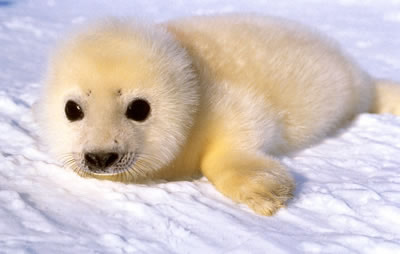 Cutest Seal