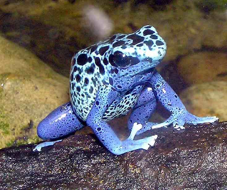 Poison Arrow Frog Food